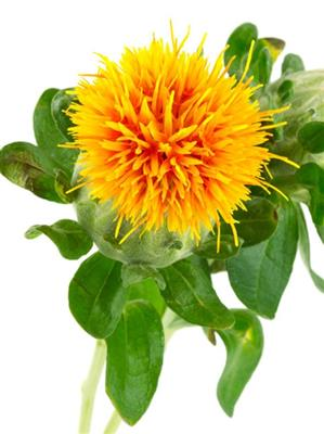 SAFFLOWER HIGH OLEIC