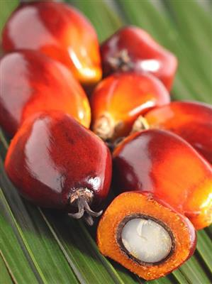 PALM OIL ORGANIC, RBD, RA, IP CU-RSPO SCC-832478